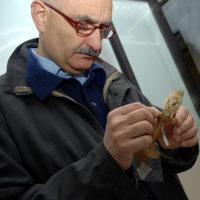 Fulvio Fraticelli